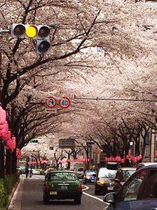 中野駅桜並木