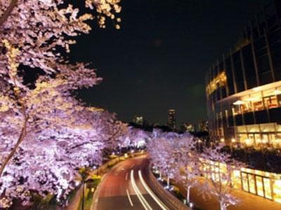 東京ミッドタウン桜ライトアップ