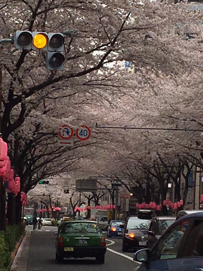 桜の撮影テクニック失敗例
