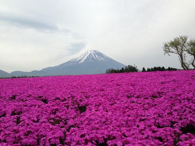 富士芝桜まつり周辺宿