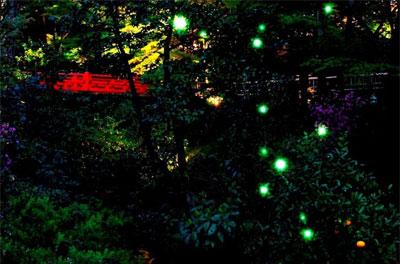 椿山荘 ほたるの夕べディナーブッフェ2019